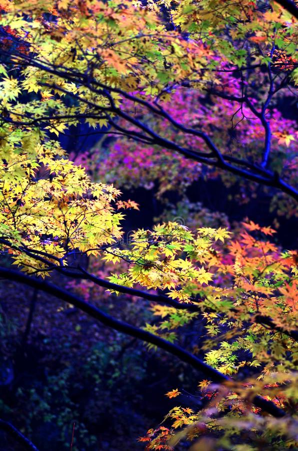 Northeast China nobody Valley beautiful autumn scenery royalty free stock photos
