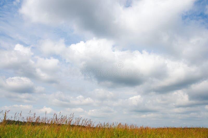 Overcast sky. Summer meadow and overcast sky stock image