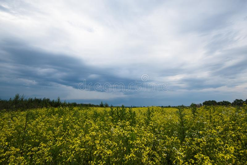 Overcast sky field wild. Dramatic nature background. Summer nature. Colorful spring landscape. Sky dark blue clouds background. royalty free stock image