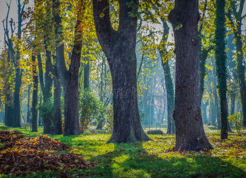 overfiltered färgrik skog för konstnärlig morgon royaltyfria foton