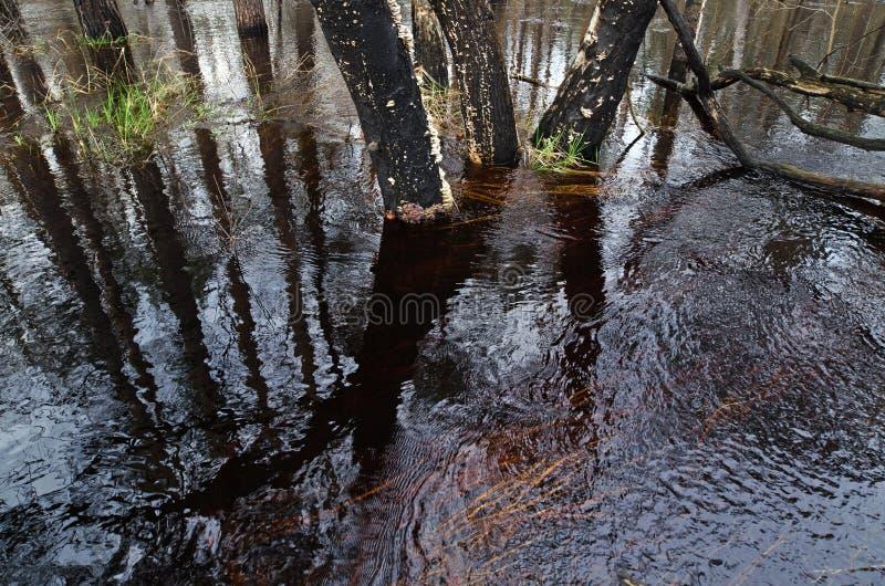 River flood in spring stock photo