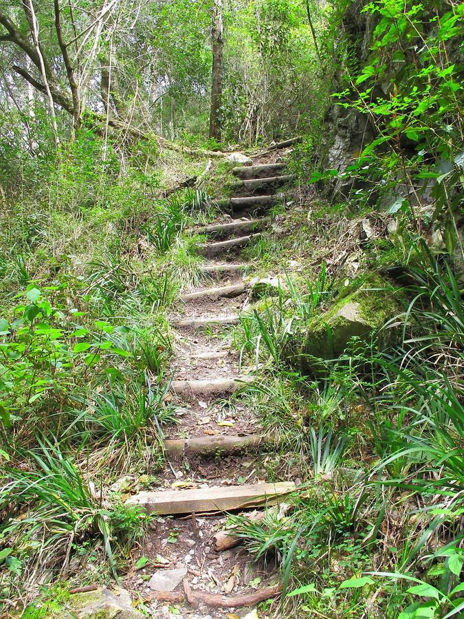 Overgrowing hiking steps in indigenous forest, South Africa stock image