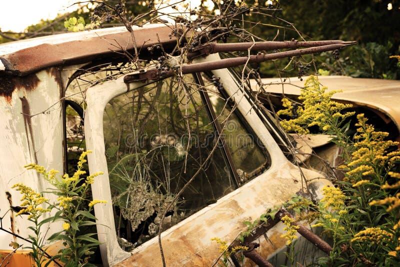 Overgrown грузовой пикап покинутый антиквариатом стоковые фото
