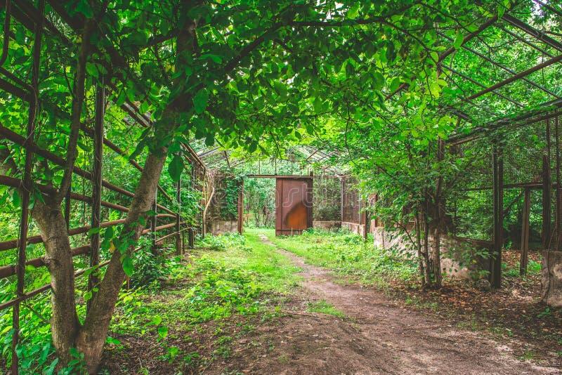 Overgrown и загубленная оранжерея стоковые изображения