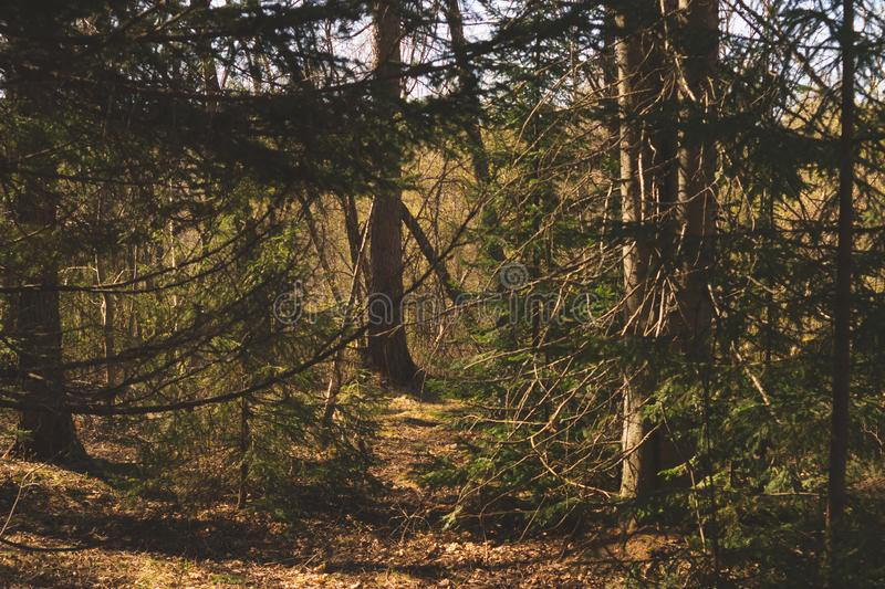 Overgrown forest. trees and plants nature. Background, green, landscape, natural, season, summer, day, environment, outdoor, park, pine, scene, inside, spruce royalty free stock photos