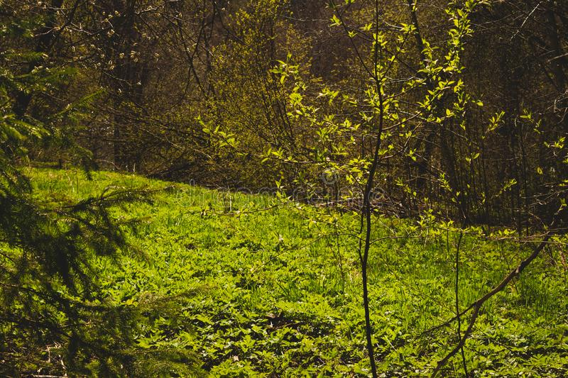Overgrown forest. trees and plants nature background. Sunny overgrown forest. grass and plants nature background. bushes and greenery, landscape, natural, season stock photo