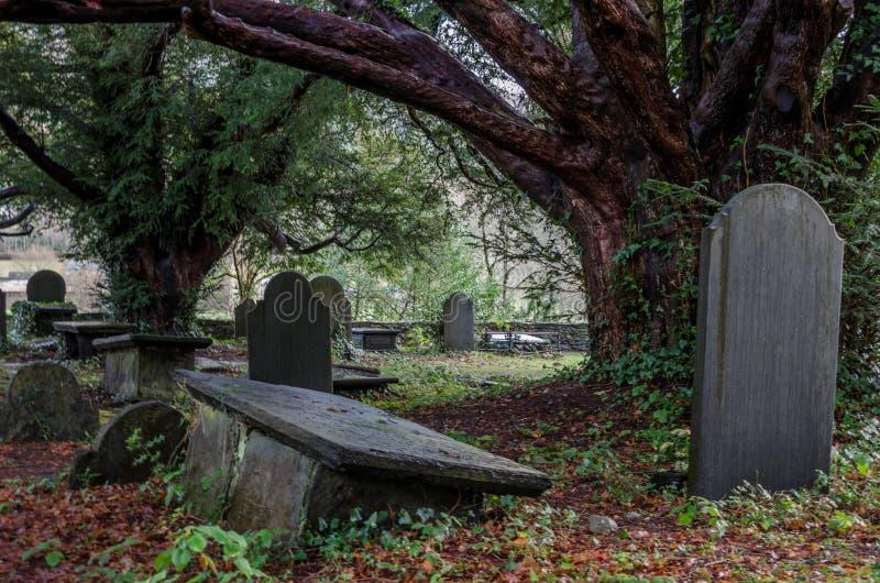 Overgrown grave yard stock image