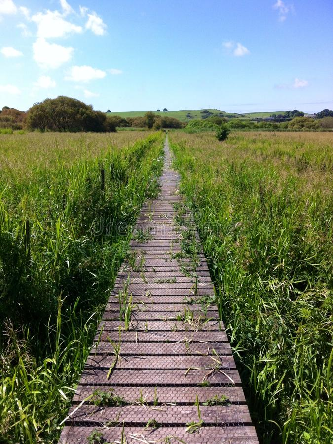 Overgrown path. This is a wooden path that was built over an area of swamp. Picture taken on a beautiful sunny summers day royalty free stock image