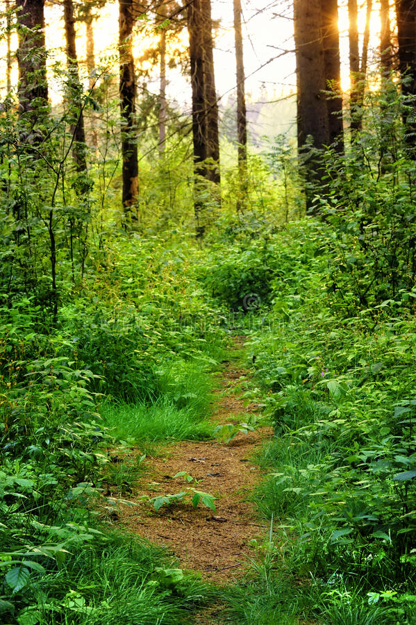 Overgrown path in the woods