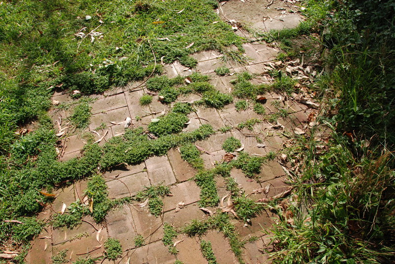Overgrown pathway. Backyard pathway overgrown with weeds royalty free stock photos