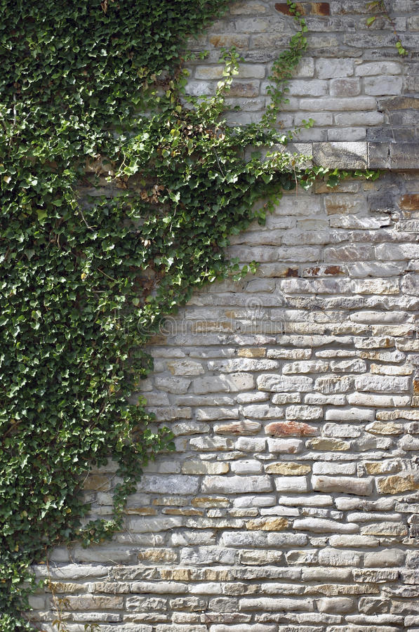 Overgrown wall