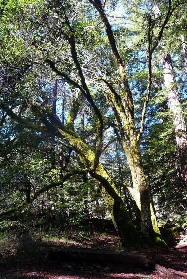 Overgrowth Mississippian στοκ εικόνες με δικαίωμα ελεύθερης χρήσης