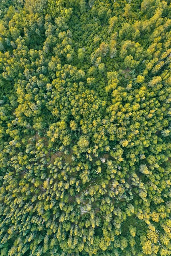 Overhead aerial drone shot of a thick beautiful forest during sunny daytime stock image