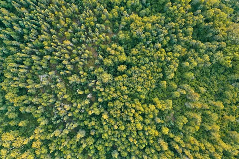 Overhead aerial drone shot of a thick beautiful forest during sunny daytime royalty free stock image