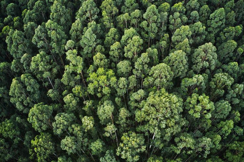 Overhead aerial shot of a thick forest with beautiful trees and greenery stock images