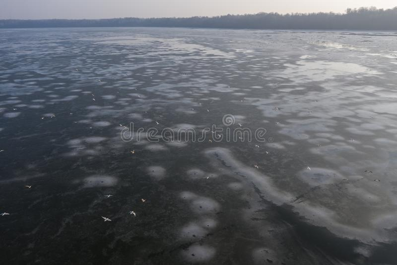 Overhead drone shot of group of white birds flying above frozen lake on a sunny day royalty free stock photo