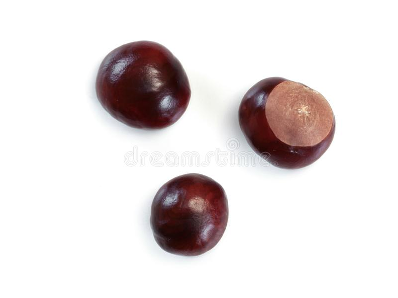 Overhead photo, three horse chestnuts isolated on white background.  royalty free stock photo