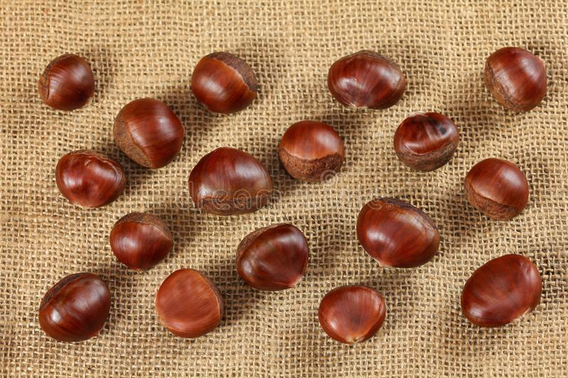 Overhead shot - glossy chestnuts on jute cloth.  royalty free stock image