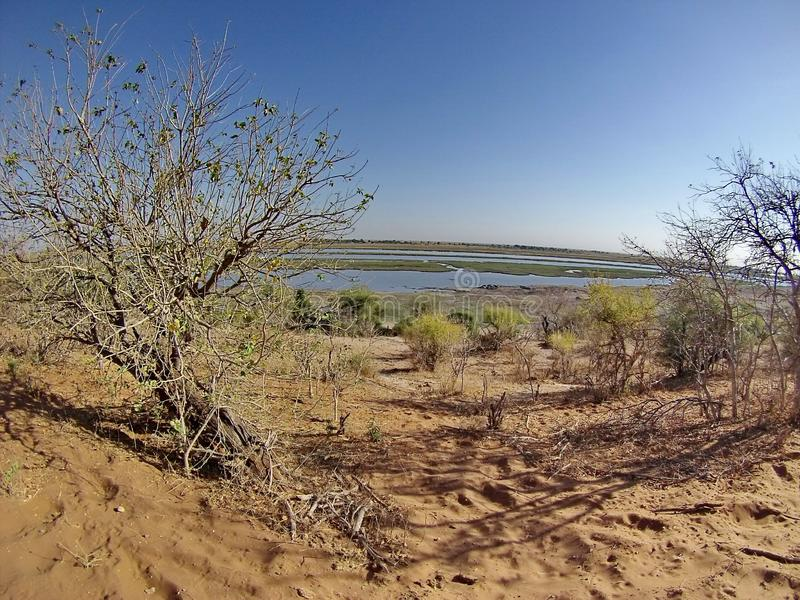 Overhead view of the Chobe River royalty free stock image