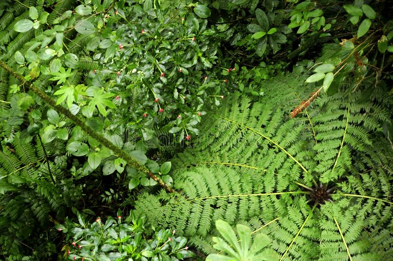 An overhead view provides a different perspective of the rainforest floor in the Monteverde Cloud Forest Reserve. The Monteverde Cloud Forest Reserve was stock images