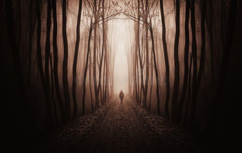 Overklig mörk skog med mannen som går i dimma fotografering för bildbyråer