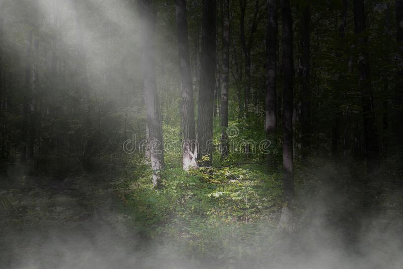 Overklig mörk skog, träbakgrund arkivfoton