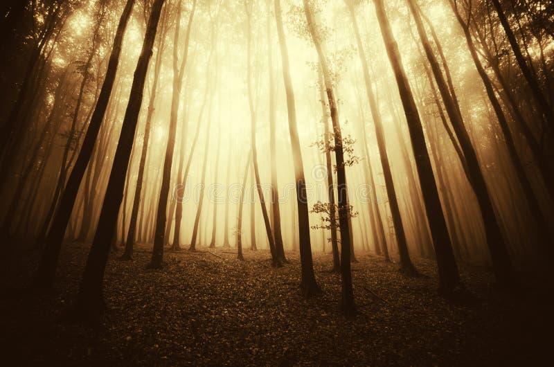 Overklig skog med dimma på soluppgång royaltyfria foton