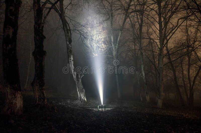 Overkligt ljus i den mörka skogen, magisk fantasilightsin den dimmiga skogen för saga arkivbild