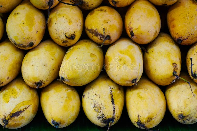 Overlapping heap of ripe yellow mangoes royalty free stock image