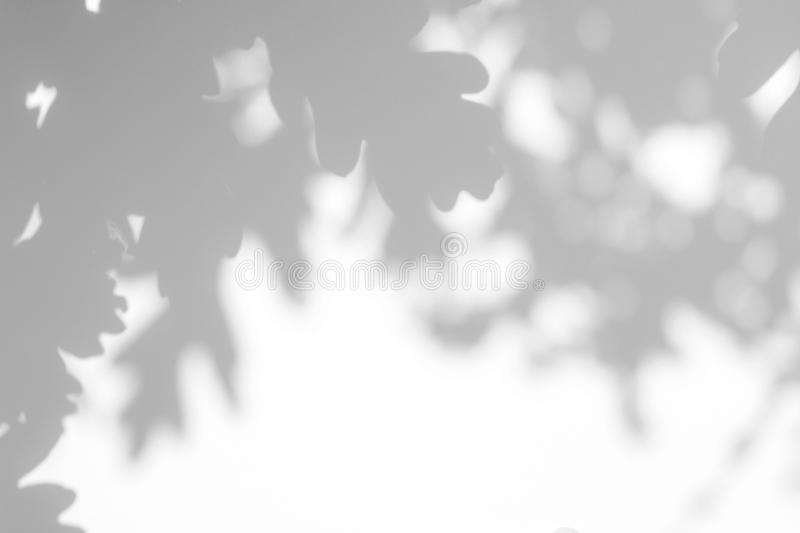 gray shadow of the leaves on a white wall stock photos