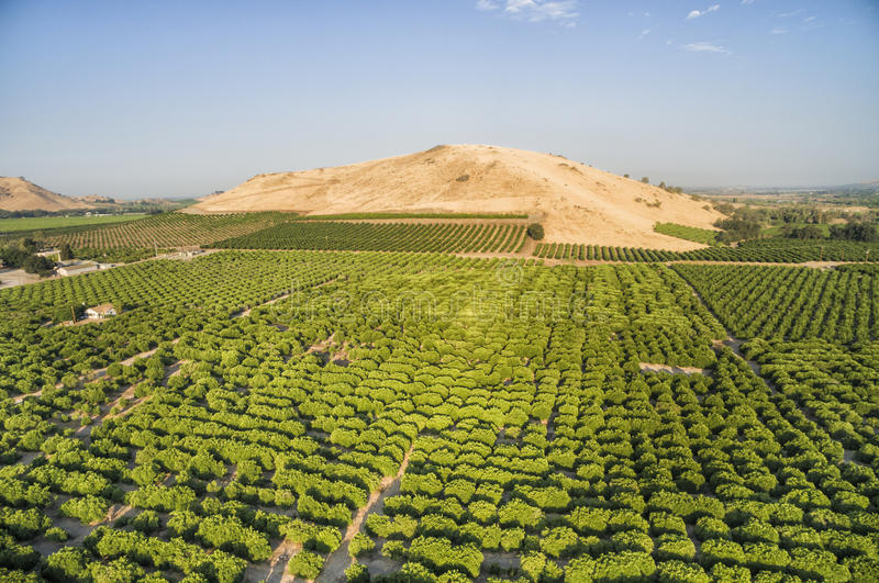Overlooking view of orange trees at Lemon Cove, USA. Small houses and beautiful green orange trees visible to horizon.nnView of Lemon Cove Village, small town stock photos