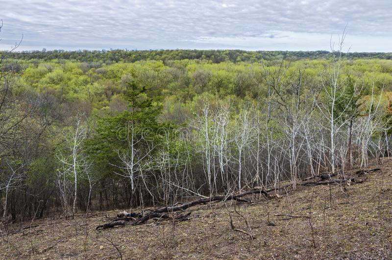 Overlooking Woodlands at Flandrau State Park. Overlooking forest during springtime at flandrau state park in new ulm minnesota royalty free stock photography
