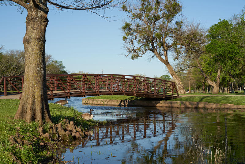 Overspannen brug over water met bomen en ganzen stock fotografie
