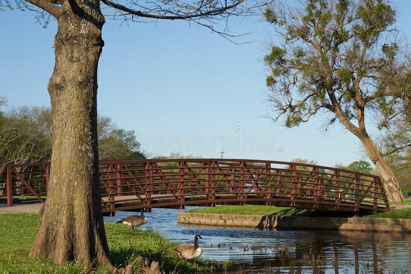 Overspannen voetbrug over blauw water met bomen en ganzen royalty-vrije stock afbeeldingen