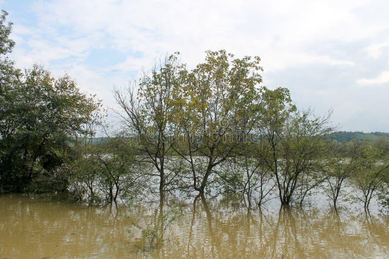 Overstroming, bomen in de waterweg worden gevangen die stock foto's