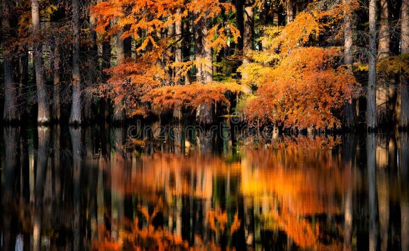 Overstroomd bos in de herfst met meerbezinning stock foto