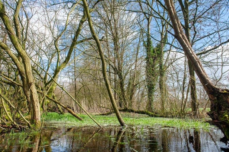 Overstroomd Moerasland dichtbij Orvelte royalty-vrije stock afbeelding