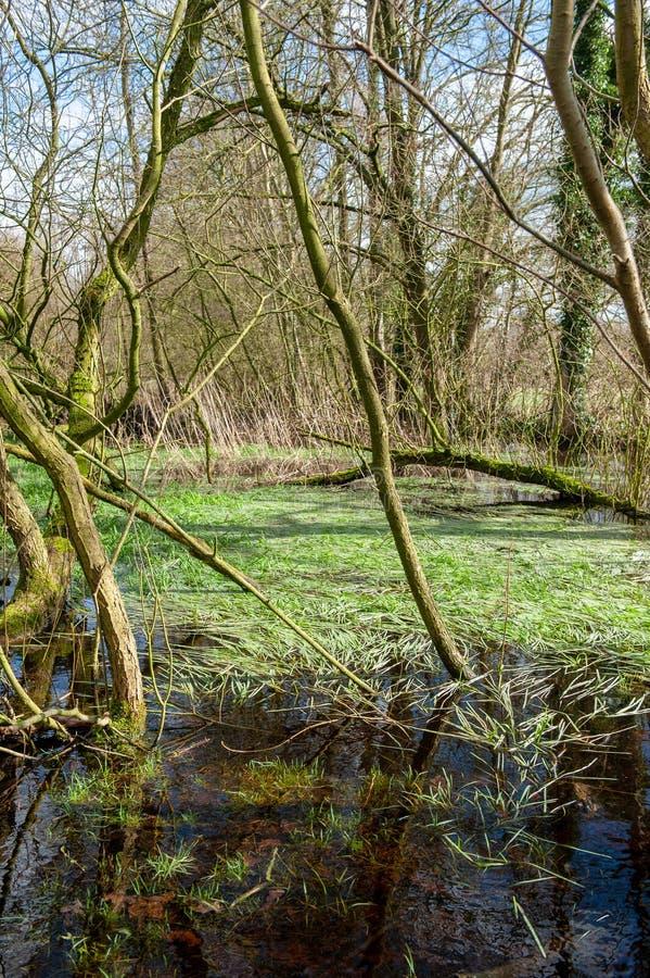 Overstroomd Moerasland dichtbij Orvelte stock foto