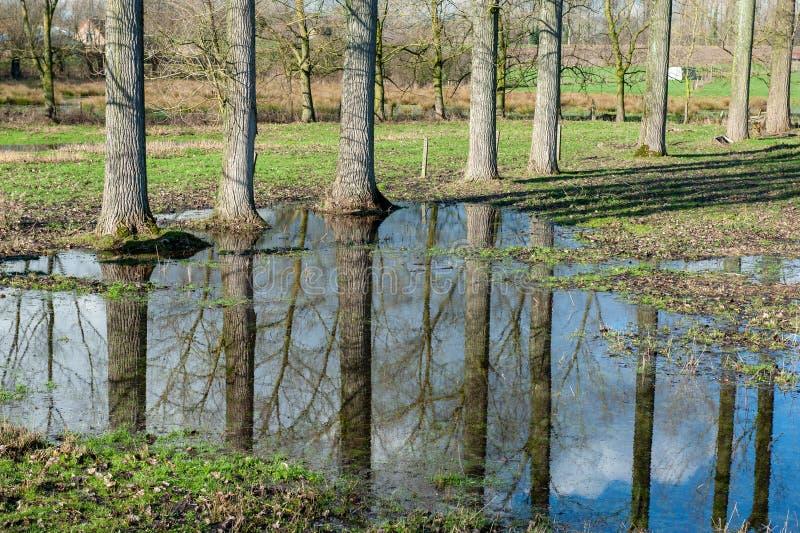 Overstroomd Moerasland in oosten-Vlaanderen royalty-vrije stock foto's