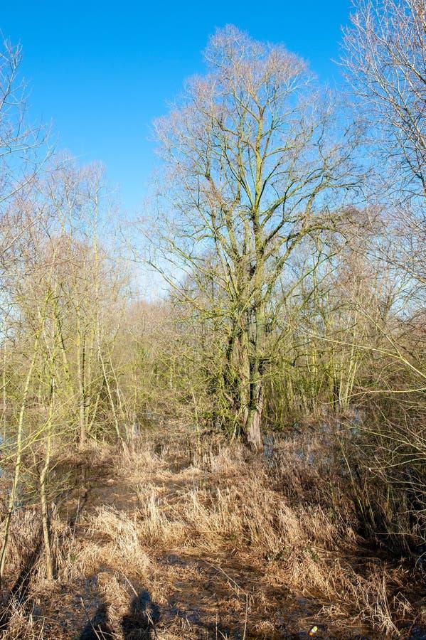 Overstroomd Moerasland in oosten-Vlaanderen royalty-vrije stock foto