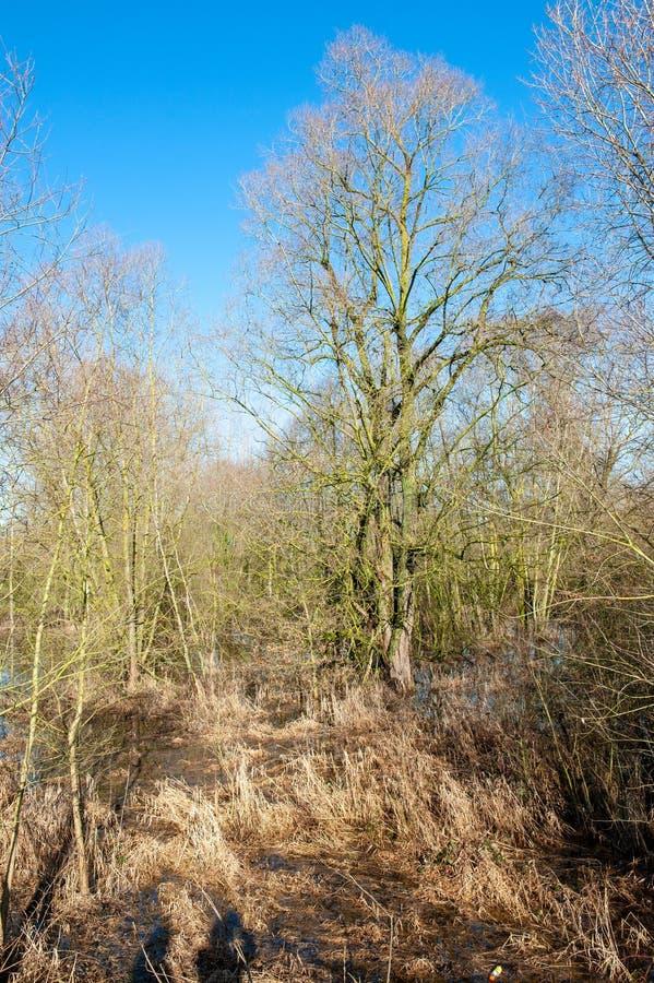 Overstroomd Moerasland in oosten-Vlaanderen royalty-vrije stock afbeelding