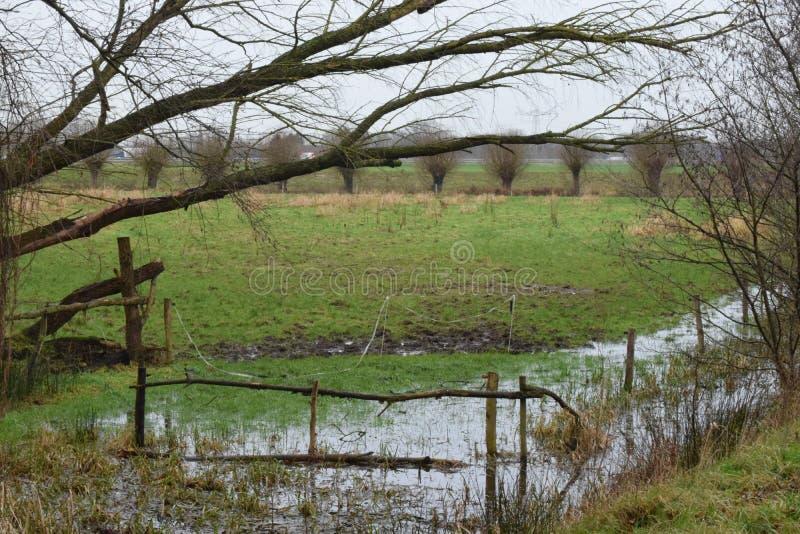 Overstroomd weiland in rivervalley Aa royalty-vrije stock fotografie