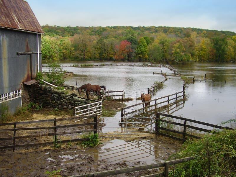 Download Overstroomde Landbouwgrond stock foto. Afbeelding bestaande uit paard - 290514