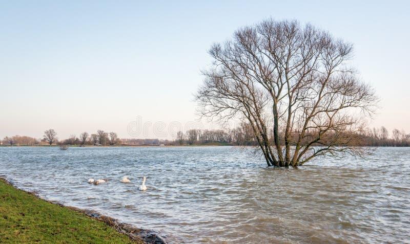 Overstroomde polder met solitaire boom royalty-vrije stock fotografie