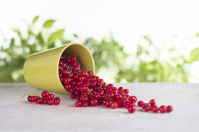 Overturned cup with red currant. On a white wooden table royalty free stock photo