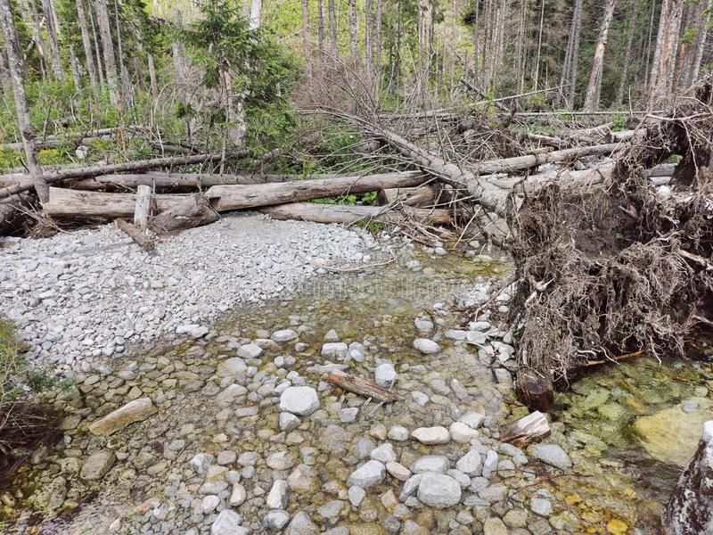 Overturned trees and uprooted roots. Mountain stream in the Tatra. Mountains stock photography