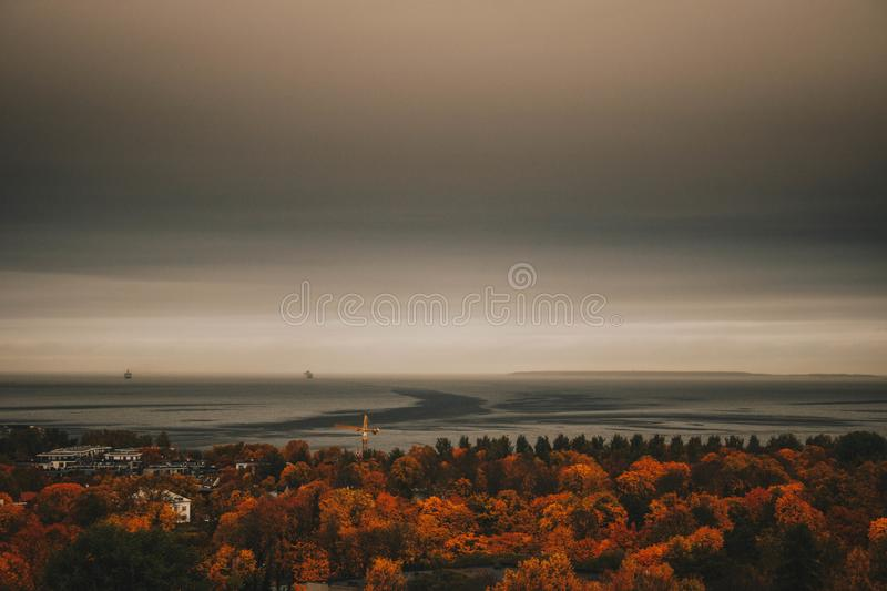 Overview Photo of Maple Trees stock photography