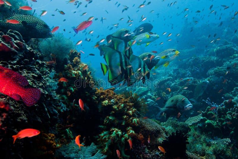 Overvloedig in vissen Indonesische overzees royalty-vrije stock foto's