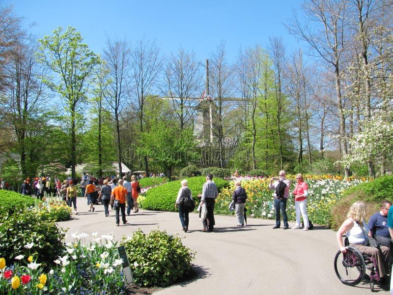 Overvol Keukenhof-park stock afbeelding