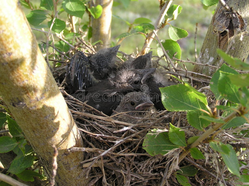 Overvol Nest royalty-vrije stock fotografie